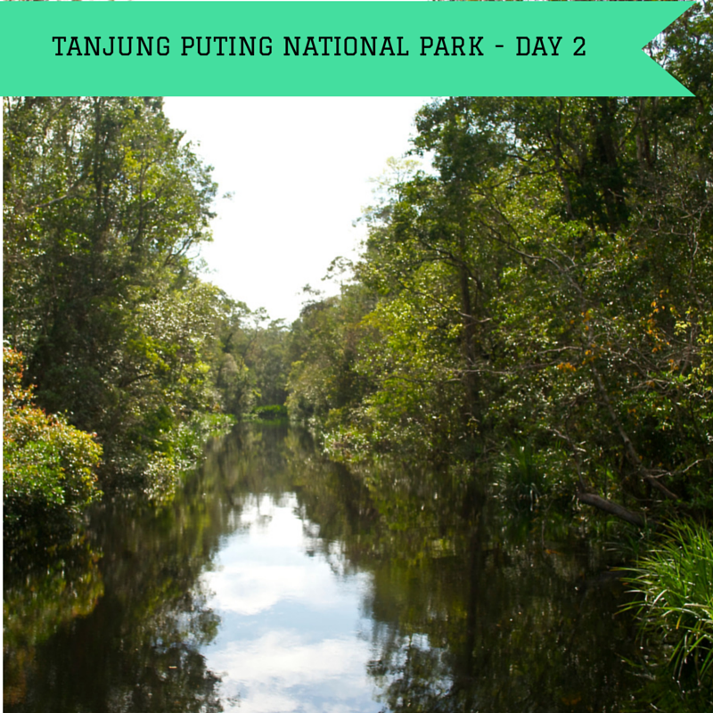 Tanjung Puting National Park Day 2 title Pic
