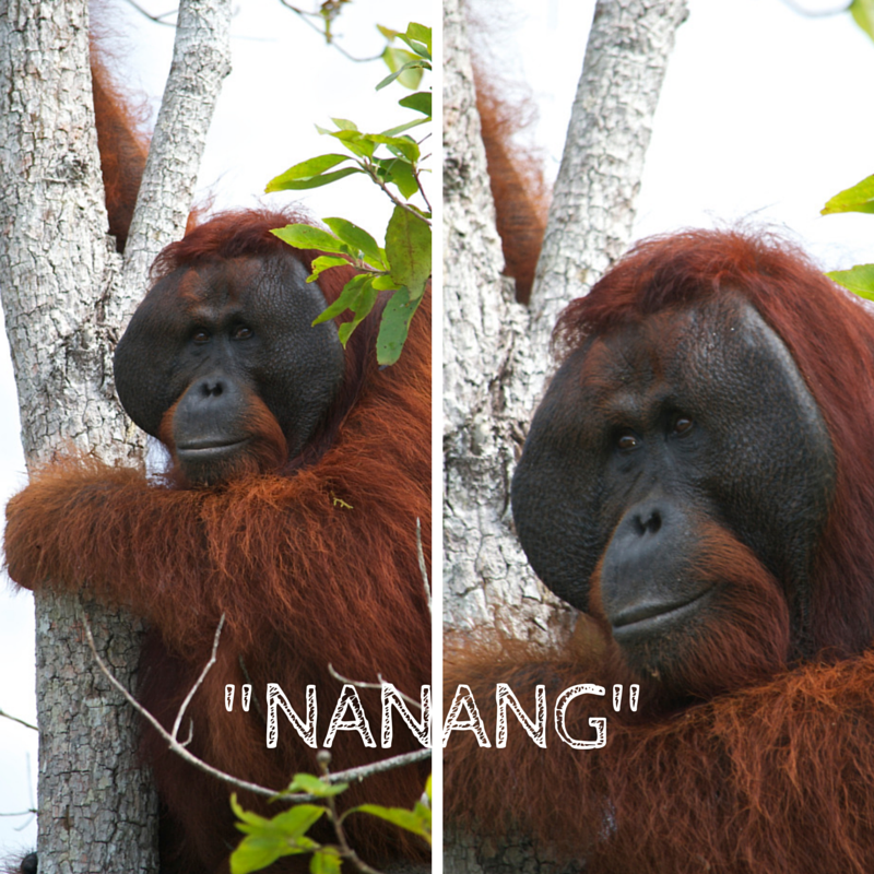 Tanjung Puting National Park Day 3 Nanang Pic Collage