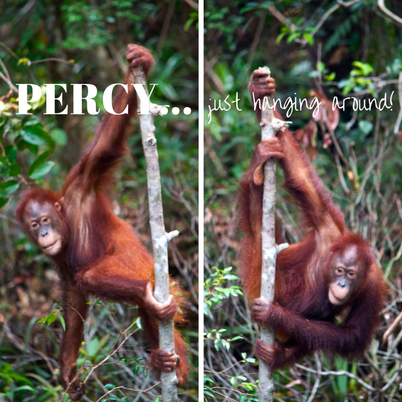 Tanjung Puting National Park Day 4 Percy pic collage