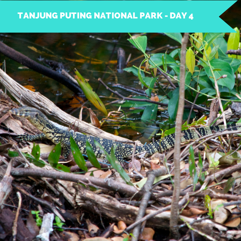Tanjung Puting National Park Day 4 Title Pic