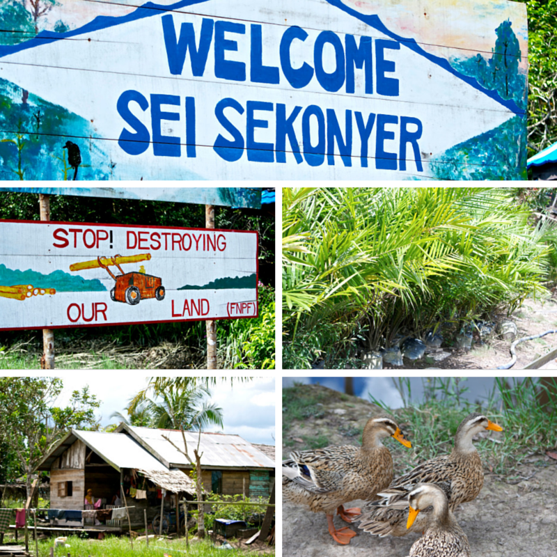Tanjung Puting National Park Day 5 Sei Sekonyer Pic Collage