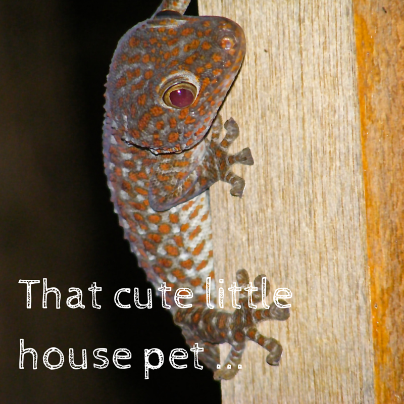 That cute little house pet Title Pic